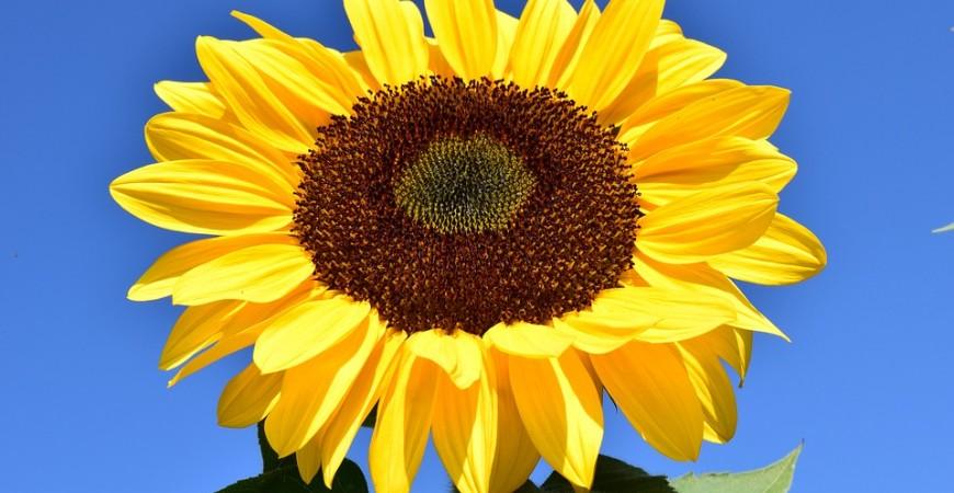 SOLARES: Tipos de radiación solar y qué debe aparecer en la etiqueta de tu fotoprotector